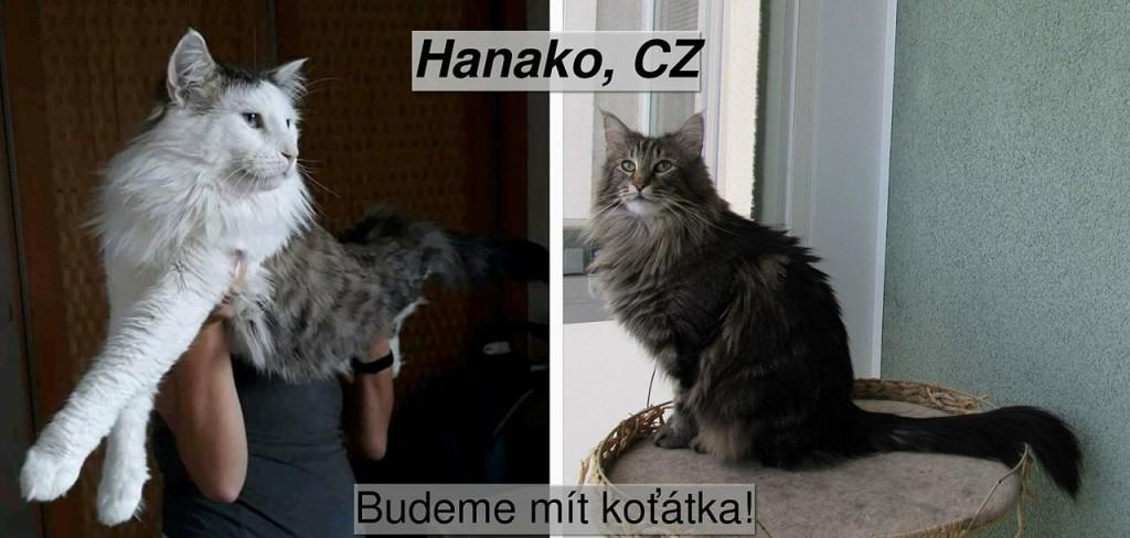 Niki+ Gustav