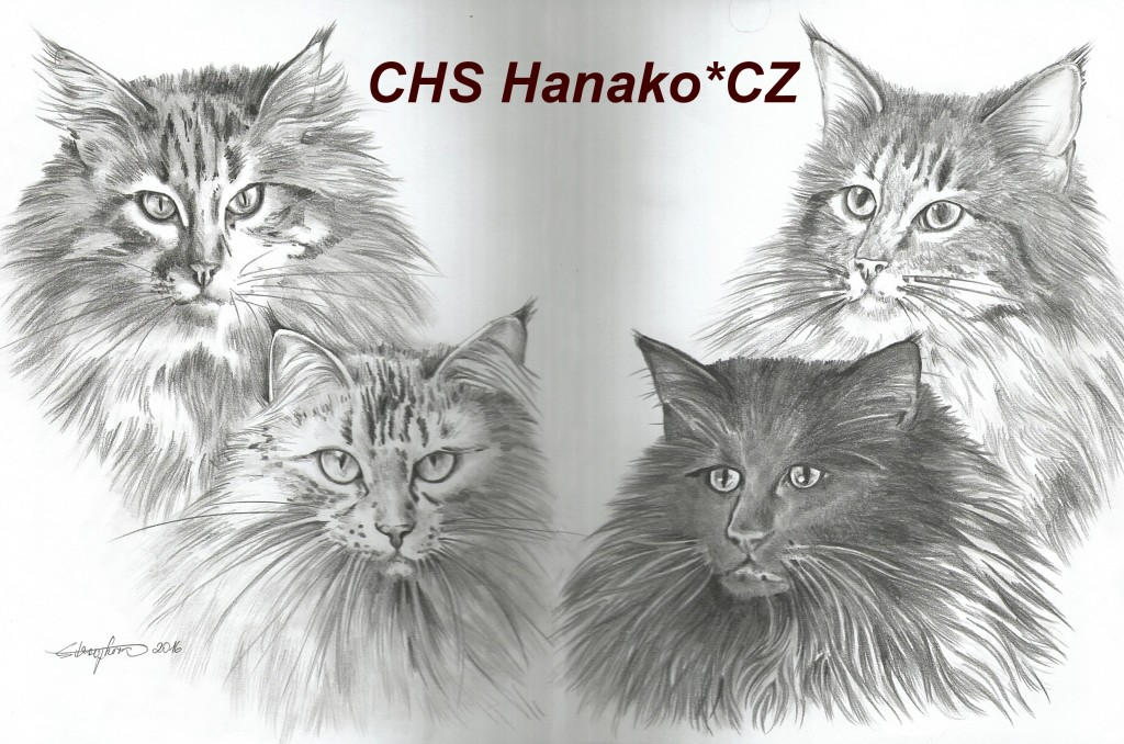 chs hanako