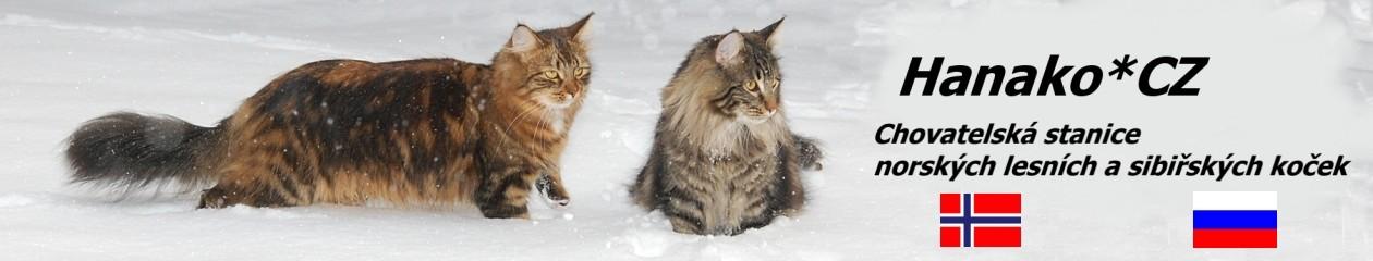 Hanako*CZ Chovatelská stanice norských lesních a sibiřských koček