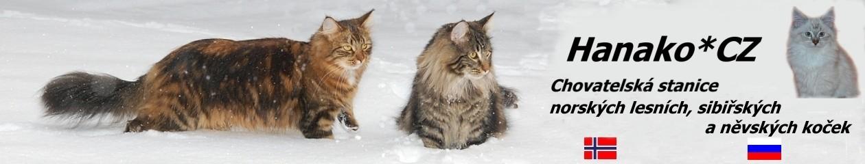 Hanako*CZ Chovatelská stanice norských lesních, sibiřských a něvských koček.