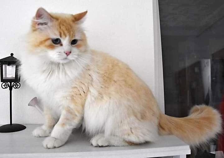 Něvská koťátka!