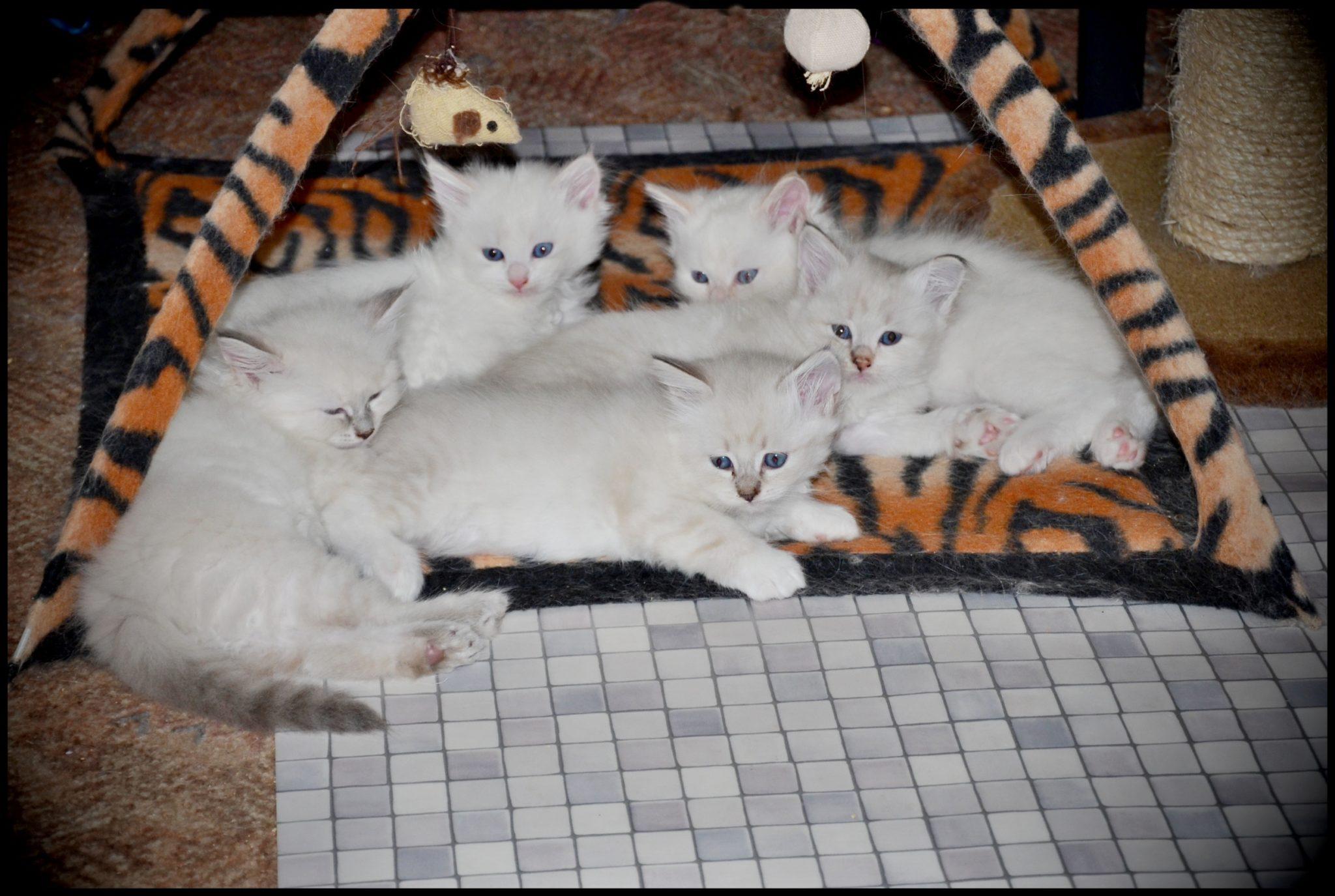 Koťátkům je už 8 týdnů :-)