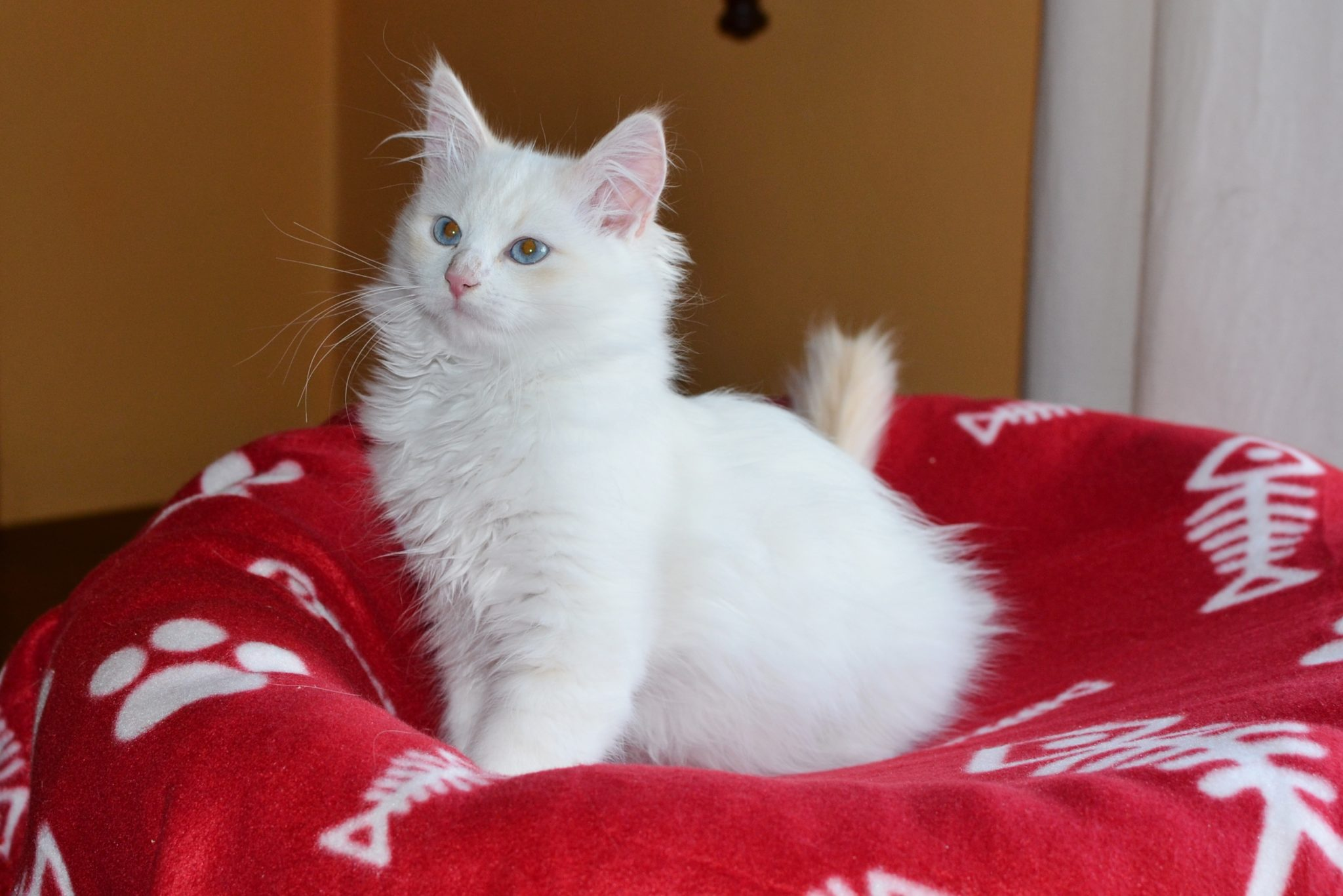 Všechna koťátka z vrhu F jsou již v nových rodinách…..